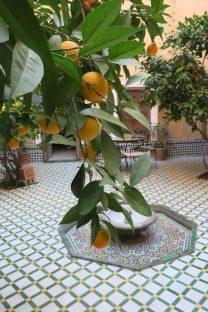 i limoni 5